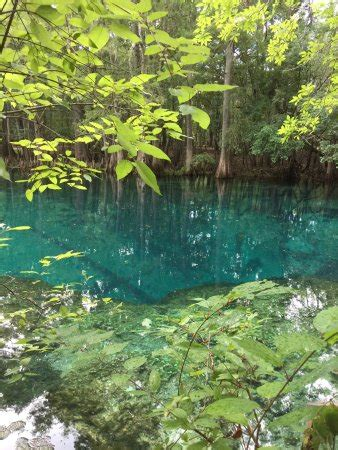 manatee springs state park chiefland fl top tips