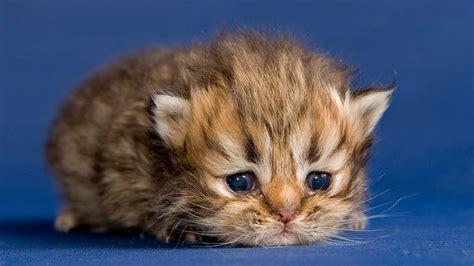 von der babykatze zum stubentiger entwicklung der katze