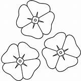 Flower Coloring Poppy Template Poppies Bestcoloringpagesforkids Remembrance sketch template