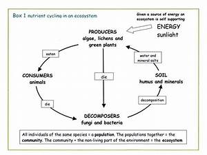 Photosynthesis Chemical Energy Diagrams, Photosynthesis ...