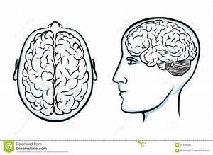 Silhouette Of Human Head With Brain Anatomy Inside Cartoon ...