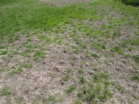 general contractors boston ma what type of lawn damage is this and what do i do about