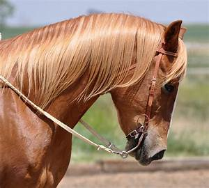 Image Gallery horse bridles and bits