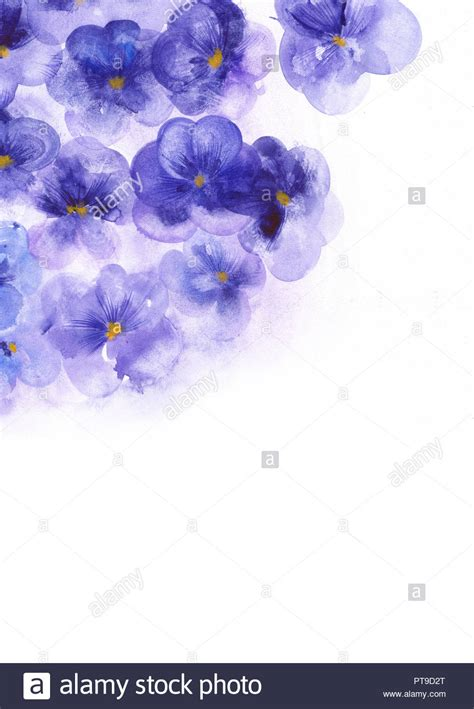 Purple flowers pansies Template for the elegant design of