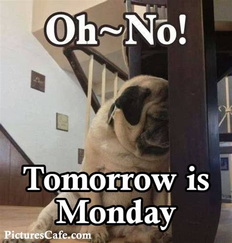 Its Monday Tomorrow Meme - 4 images tagged with pug pictures cafe