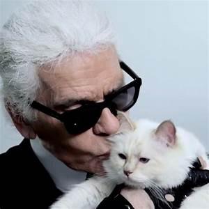 Choupette Chat Karl : karl lagerfeld l hommage de son chat choupette son ma tre disparu elle ~ Medecine-chirurgie-esthetiques.com Avis de Voitures