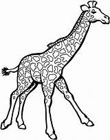 Giraffe Coloring Pages Printable Animals Zoo sketch template