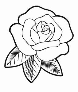 Drawing Roses For Beginners - DRAWING ART IDEAS