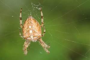 Mittel Gegen Spinnen Im Haus : wie kommen spinnen ins haus mit diesen tricks kommen ~ Michelbontemps.com Haus und Dekorationen