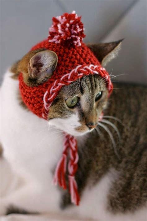 Iedvesmai: Siltumam! | Christmas cats, Cat hat, Crazy cats