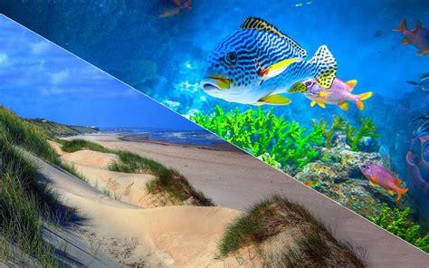 escapade centre aquariophile et terrariophile du nord