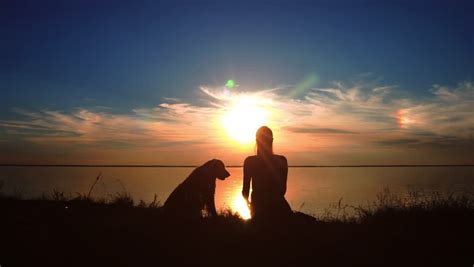 woman hugs  dog  sunset stock footage video