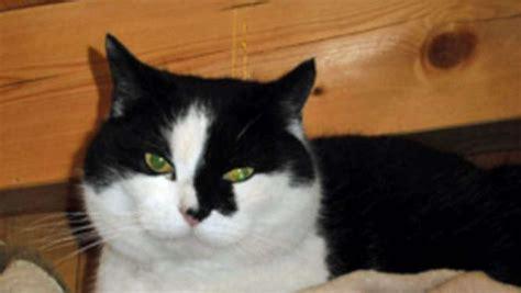 burghausen erfahrene katzendame sucht neues zuhause