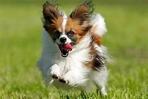 Bodenbelag Für Hunde Geeignet : hunderassen f r anf nger die besten tipps tierportal ~ Lizthompson.info Haus und Dekorationen