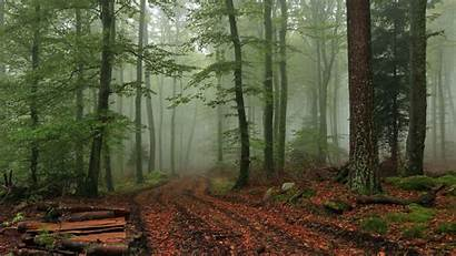 Forest Foggy Wallpapers Nature Fog Background Backgrounds