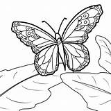 Butterfly Coloring Monarch Pages Printable Blank Drawing Sheets Template Cycle Caterpillar Deviantart Sheepdog English Drawings Getcolorings Line Templates Source Stpetefest sketch template