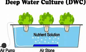 What Is Deep Water Culture  Dwc  Hydroponics
