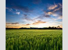 Wallpaper Farm, Sunset, HD, Nature, #5335