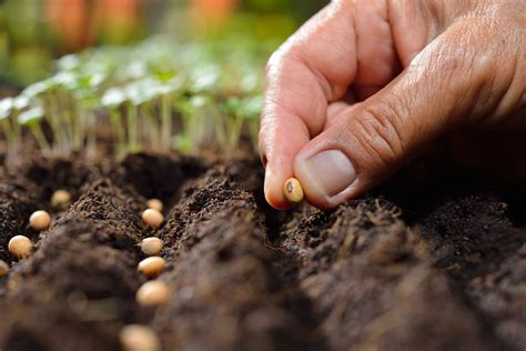 sowing seeds images how to sow seeds