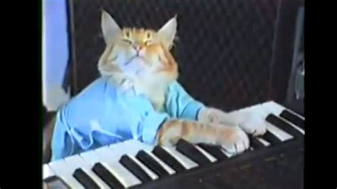 keyboard cat  play  puppy bowl halftime show
