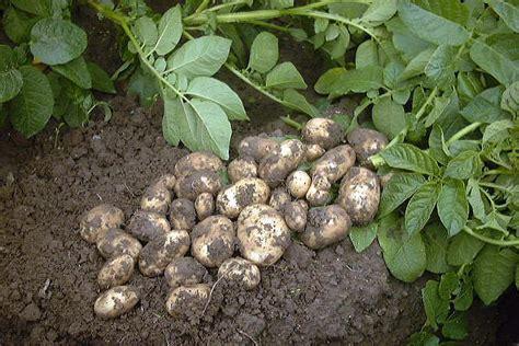 ucpt l 233 gumes et horticulture en bretagne la pomme de