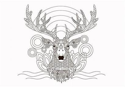 Coloring Vector Deer