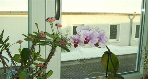 piante da davanzale tipologie di piante da interno piante appartamento