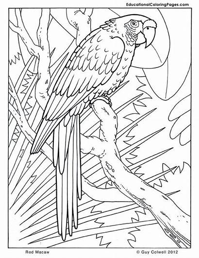 Coloring Pages Trees Macaw Printable Fun Worksheets