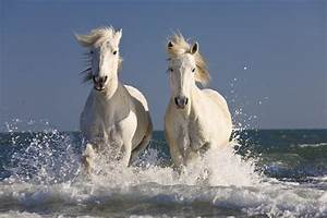 This Video Of A Horse Experiencing Water For The First ...