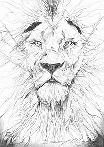 Lion Pencil Drawing by ART-BY-DOC on DeviantArt