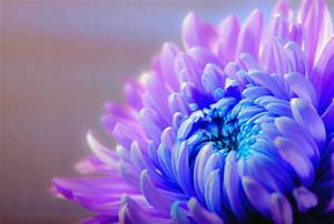 Free Images : nature, blossom, purple, petal, bloom, color ...