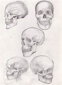 Skull Sketches Drawings
