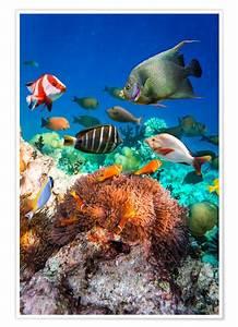 Bild Hochkant Format : coral reef in the maldives poster posterlounge ~ Orissabook.com Haus und Dekorationen