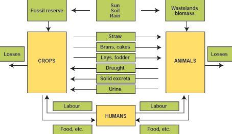 mixed crop livestock farming