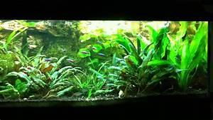 Aquarium Led Beleuchtung : aquarium led beleuchtung youtube ~ Frokenaadalensverden.com Haus und Dekorationen
