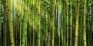 Is Bamboo Fabric Really Eco-Friendly? - Swedbrand Group