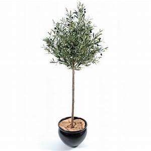 location arbres region centre loir et cher facile With eclairage exterieur pour arbre 9 location olivier arbre deco facile location reception