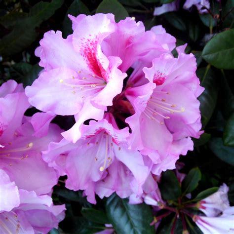 Britzer Garten Roller by Ich Brauche Eine Lila Aufmunterung Claras