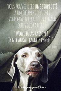 Video Pour Chien : citations sur les chiens ~ Medecine-chirurgie-esthetiques.com Avis de Voitures
