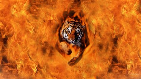 Cool Animal Wallpapers Hd - in flames wallpapers 2015 wallpaper cave
