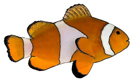 animated fish pictures clipart best