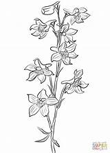 Larkspur Coloring Pages Flower Drawing Tattoo Drawings Line Printable Tattoos Delphinium July Flowers Birth Supercoloring Month Paper Getdrawings Categories sketch template