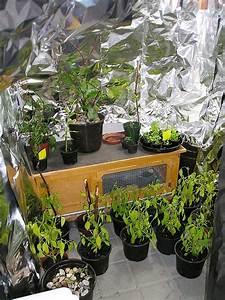 Hortensien überwintern Im Keller : berwintern im keller mit beleuchtung f r 20 euro majas pflanzenblog ~ Frokenaadalensverden.com Haus und Dekorationen