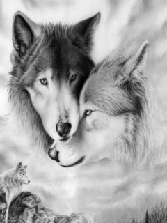 wolf bilder format