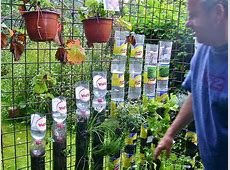 Bottle tower gardening how to start ? Willem Van Cotthem