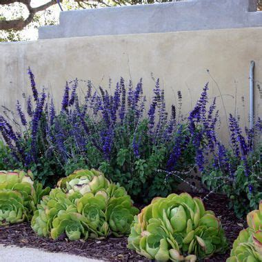 Drought Tolerant Yard In Southern Ca  Google Search