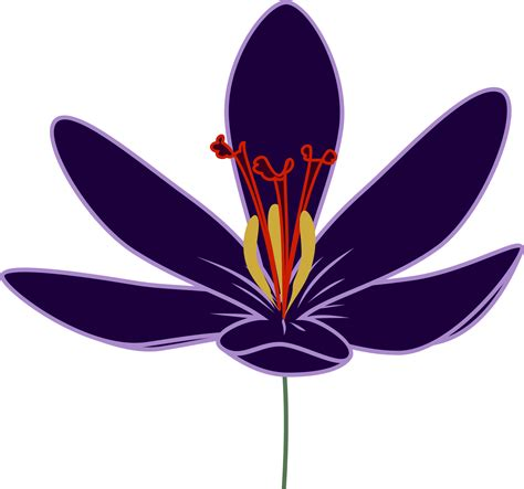Wallpaper Clipart by Saffron Flower Clipart Clipground