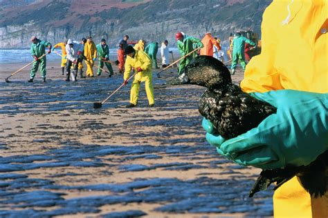 How Do Oil Spills Damage The Environment
