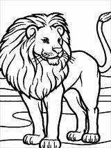 Lion Coloring Children Pages Simple Animals sketch template
