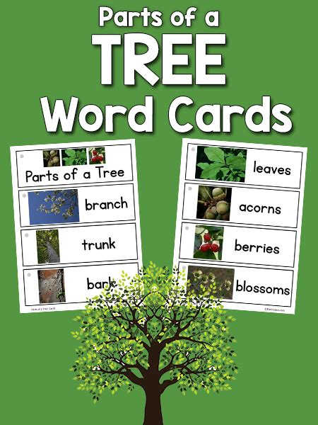 parts   tree picture word cards prekinders
